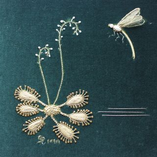 Dragonfly and Sundew by Sally Chapman